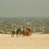 egypt2002-101giza
