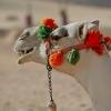 egypt_wadi-el-sebua_camels-3