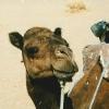 morocco-zagora3