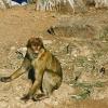 morocco_atlas-to-erfoud1