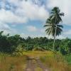 papua-niugini-wasab3