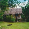 papua-niugini_kau-rainforest1
