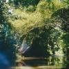 papua-niugini_kau-rainforest2