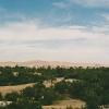 syria-palmyra-oasis